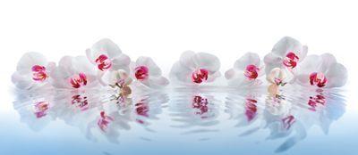 Орхидеи в воде